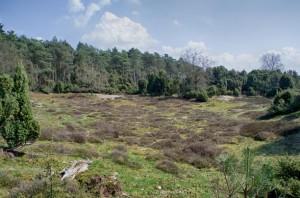 Heidelandschaft_Heide
